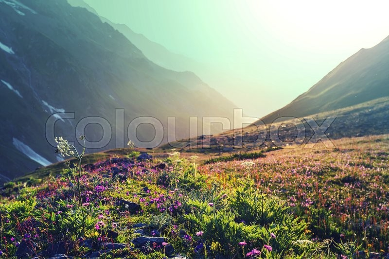 Stock image of 'Mountain meadow'