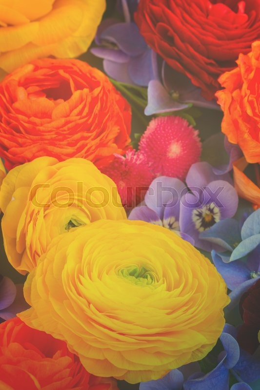 Stock image of 'vivid Fresh  Flowers Background - ranunculus, pansies and hortensia, retro toned'