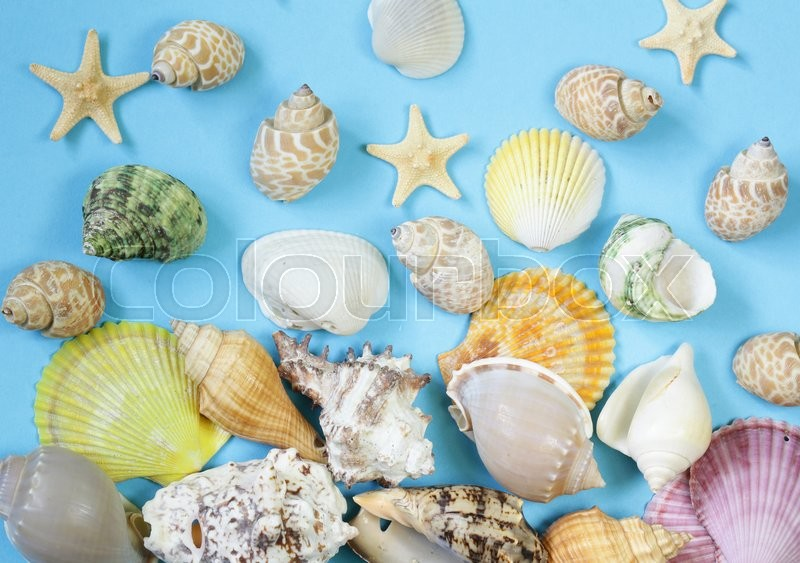 Stock image of 'Travel concept pattern made of variety of sea shells'