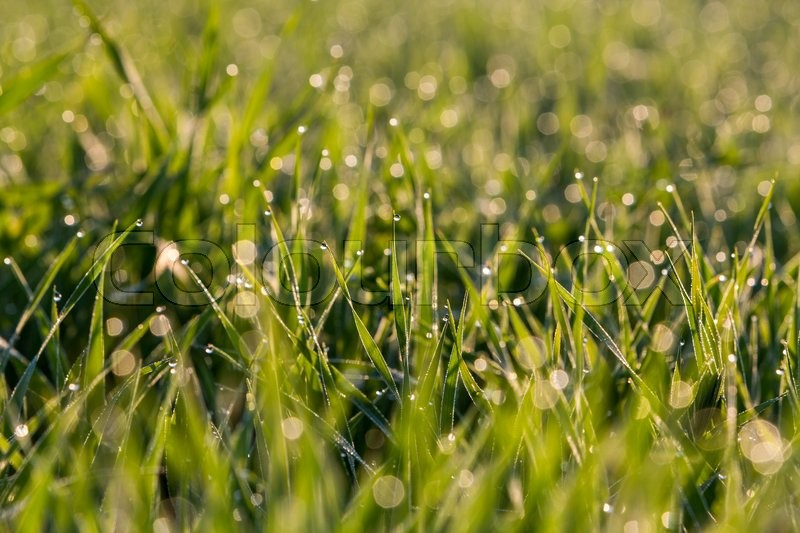 Stock image of 'View of blurred water drops on the grass in the morning'