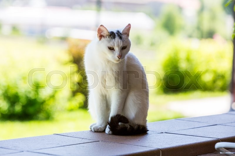 Stock image of 'View of a white car from the shelter house sitting on a wall'