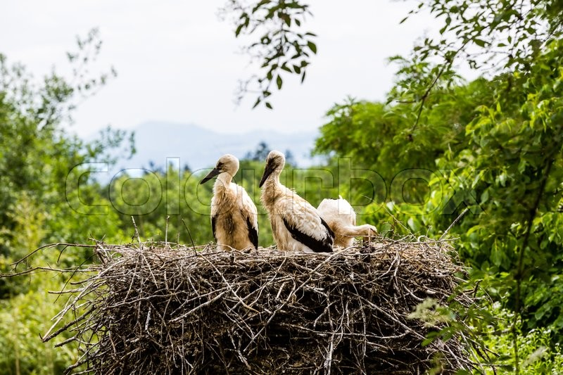 Stock image of 'Details view of a stork family in Zoo in Switzerland'