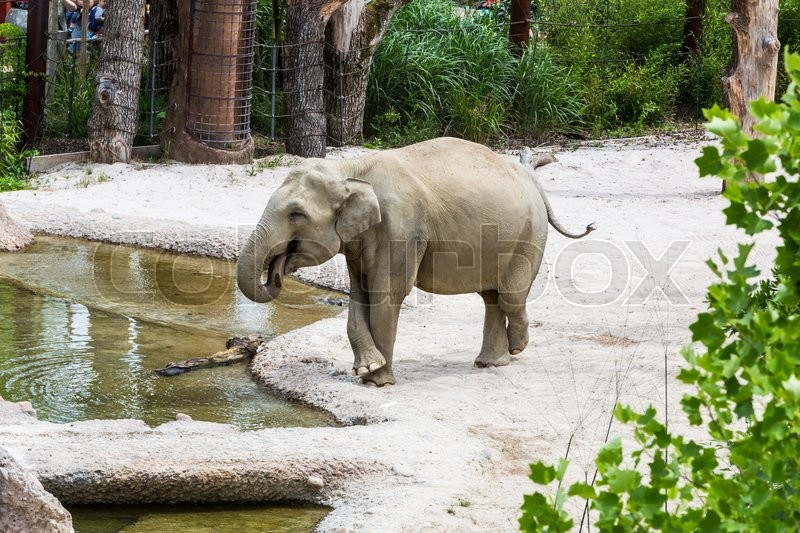 Stock image of 'View of elephants in new compound in a swiss zoo in summer 2015'