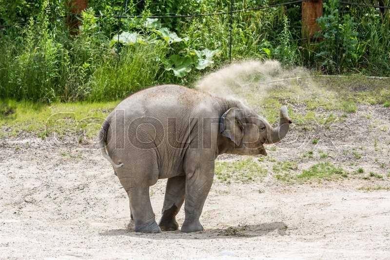 Stock image of 'View of a young elephant in a swiss zoo in summer 2015'