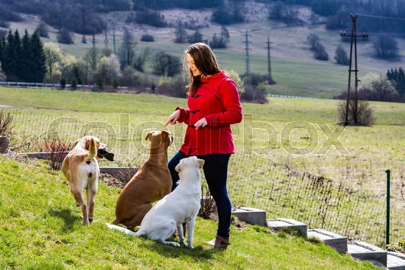 Stock image of 'A young woman is playing with pets in the garden'
