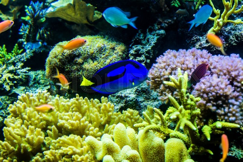Stock image of 'View of colorful fishes in an aquarium in a zoo'