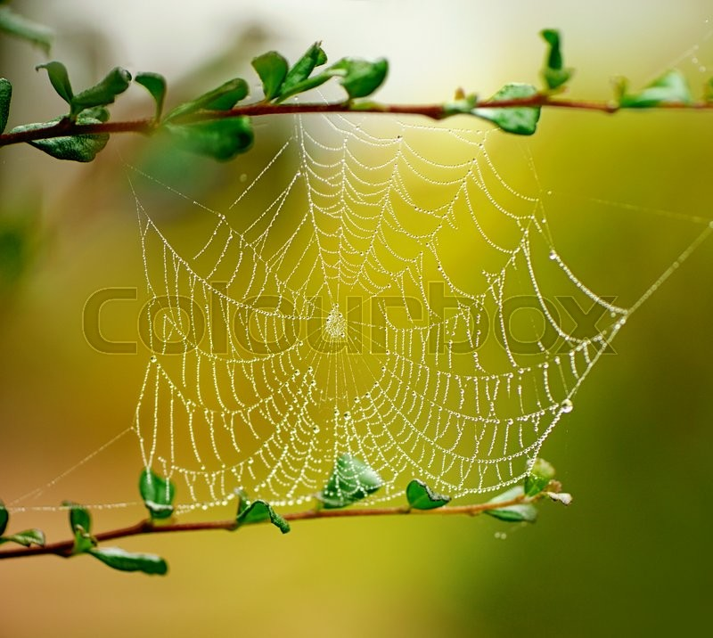 Stock image of 'Spider web in the morning'