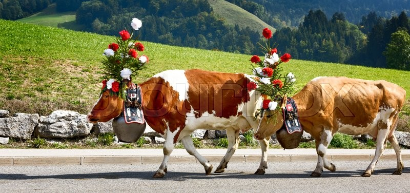 Stock image of 'Farmers with a herd of cows on the annual transhumance at Charmey near Gruyeres, Fribourg zone on the Swiss alps'
