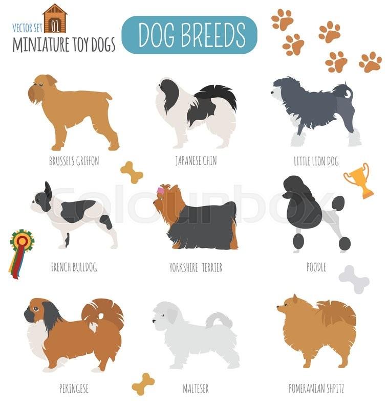 Miniature Toy Dog Breeds : Dog breeds miniature toy set icon flat style vector