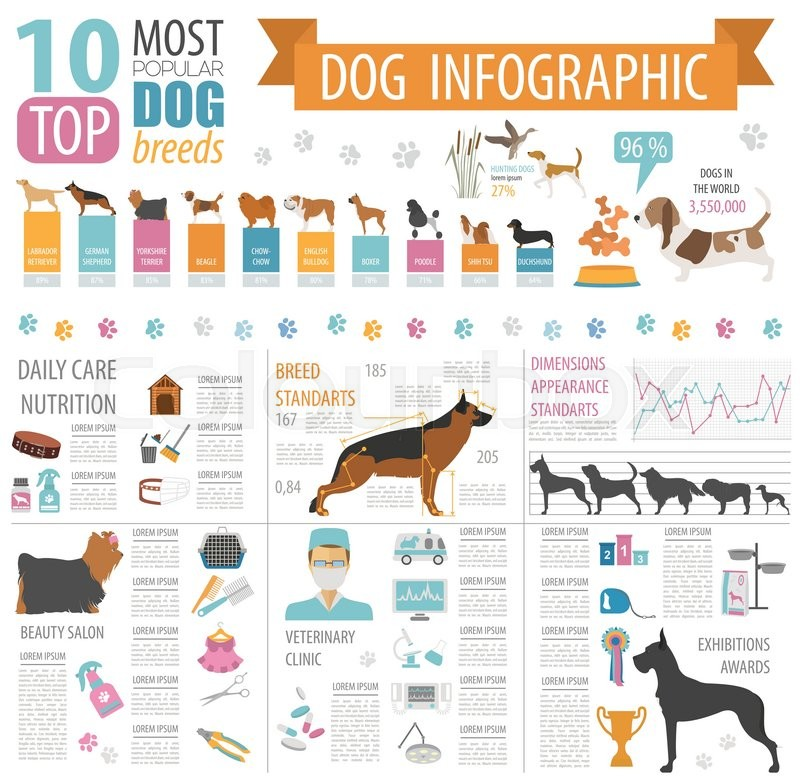 Dog Info Graphic Template Heatlh Care Vet Nutrition Exhibition