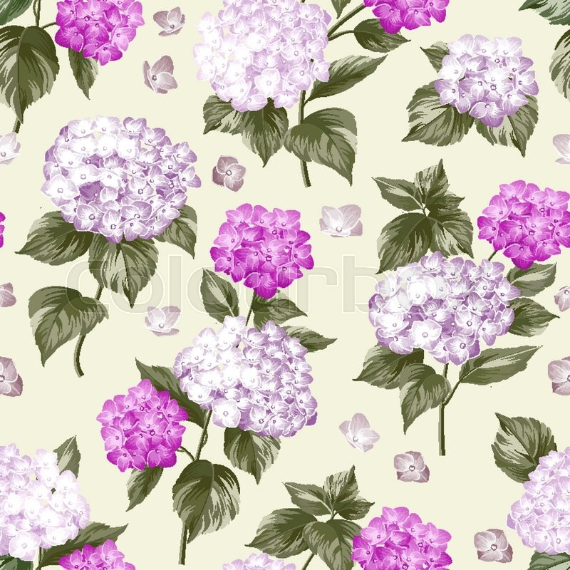 Violet flower hydrangea on gray background. Mop head hydrangea flower pattern. Beautiful summer flowers on the gray. Vector illustration, vector