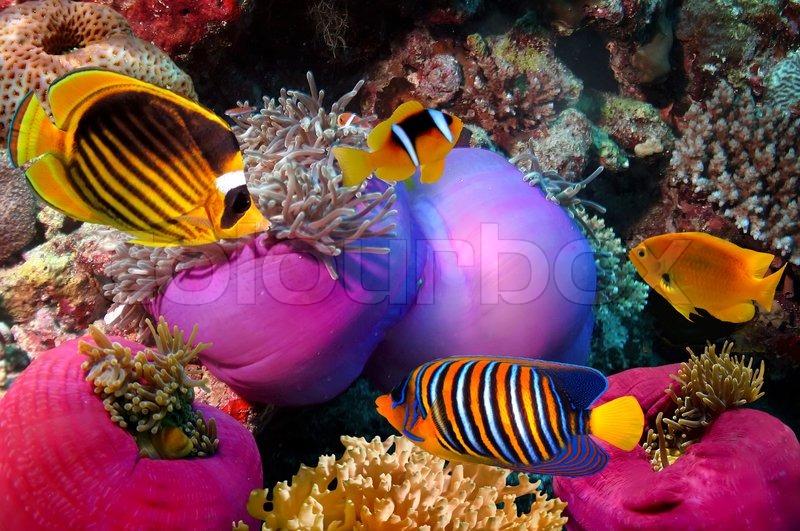 unterwasserleben von einem korallenriff  rotes meer