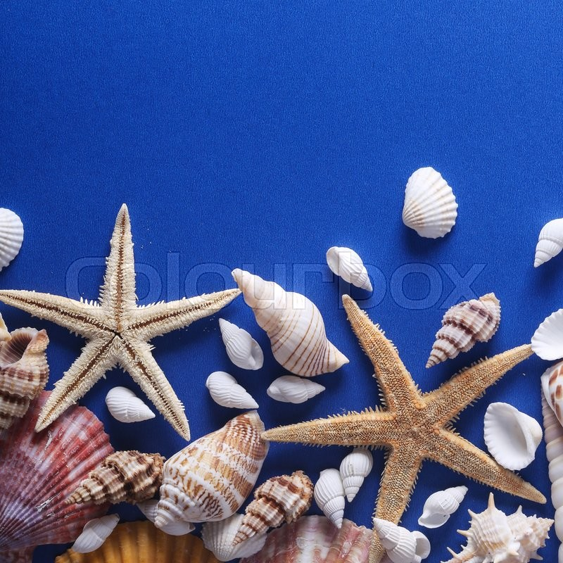 Stock image of 'Some Beautiful Seashell is on the blue background wiith copyspace.'