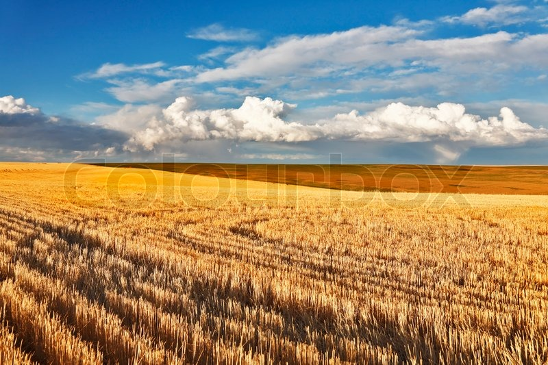 Charming pastoral landscape in fields of Montana. After a thunder-storm, stock photo
