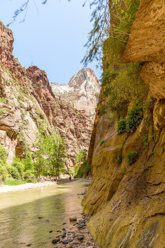 Editorial image of 'Zion National Park, Utah, USA - June 03, 2015: Tourist hiking on the shippery rocks along Virgin River in the Narrows of Zion National Park, surrounded by the walls of the canyon.'