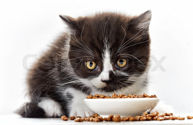 Stock image of 'kitten and bowl of cat food'