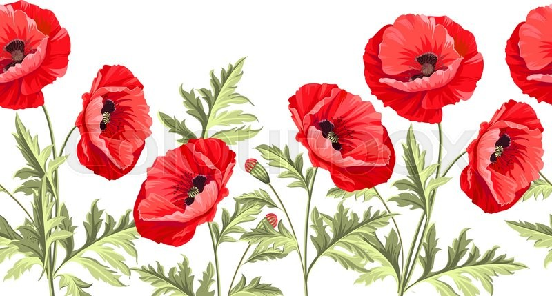 I love you card bunch poppy flowers on a white background poppy bunch poppy flowers on a white background poppy card for paper label and other printing or web projects label with poppy flowers mightylinksfo Gallery