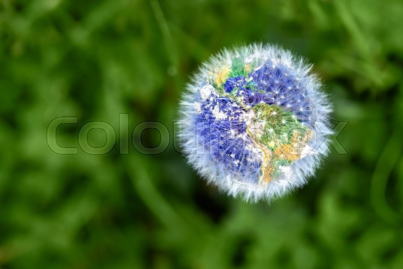 Stock image of 'Dandelion with earth shape against green backgound'