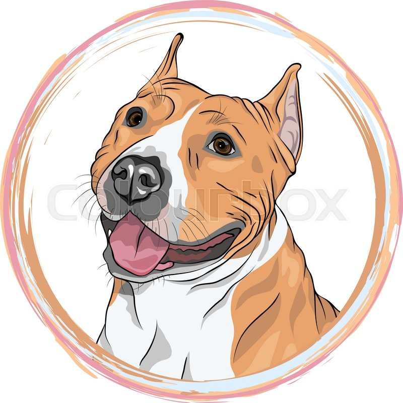 Stock image of 'Closeup portrait of the smiling dog. Dog American Staffordshire Terrier breed in the round frame. T-shirt Graphics. Dog print.'
