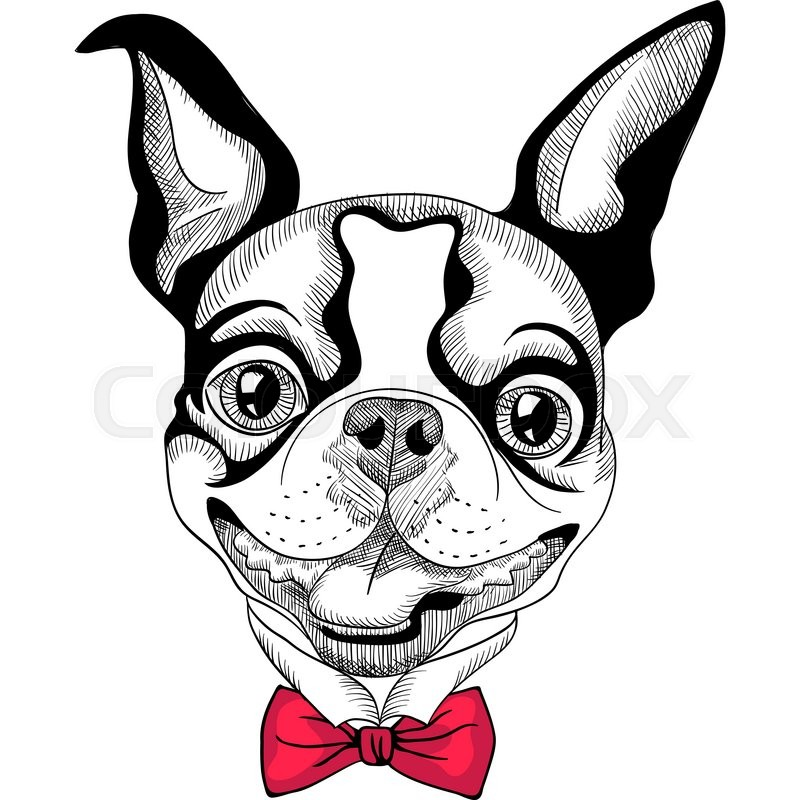 Stock image of 'Funny cartoon hipster Boston Terrier breed smiling'