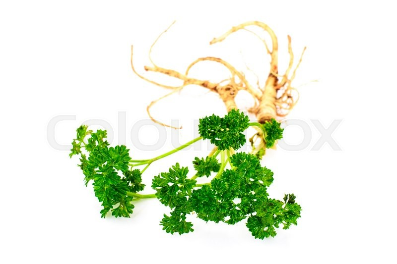 Stock image of 'Green Parsley with Root Isolated on White Background'