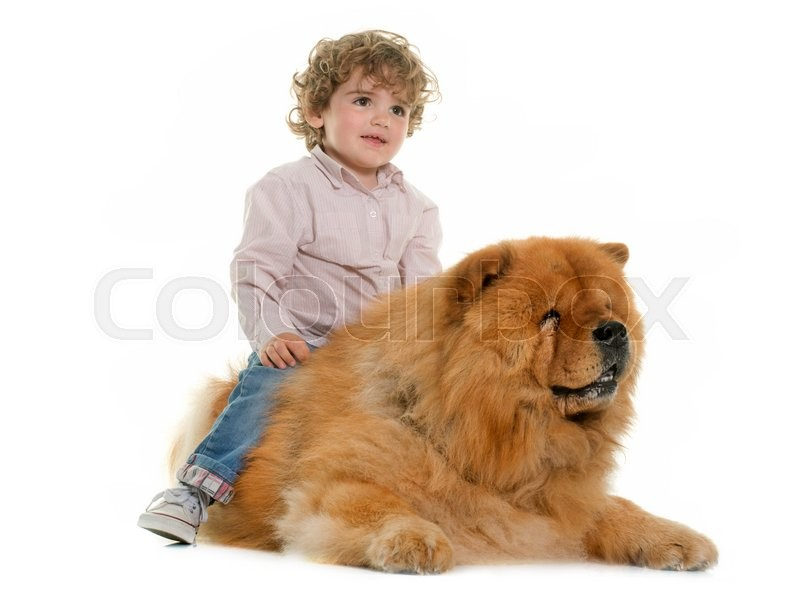 Stock image of 'chow chow and boy in front of white background'