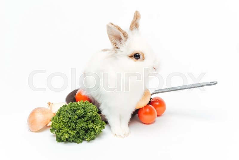 Stock image of 'Rabbit inside a frying pan isolated on a white background'