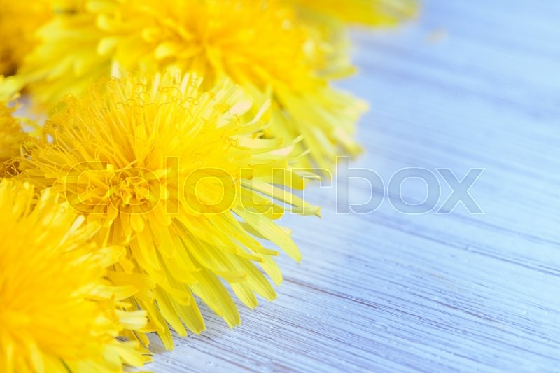 Stock image of 'Bouquet of yellow dandelions white Board closeup'