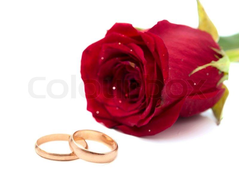 Rote Rose Mit Eheringen Auf Weiem Hintergrund Stock