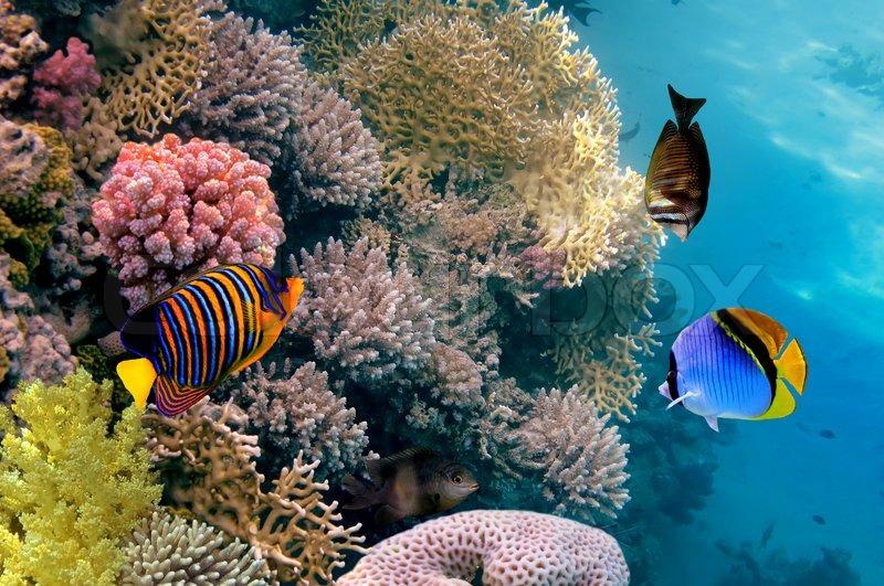 Unterwasser leben eines hart stockfoto colourbox - Aquarium hintergrund ausdrucken ...