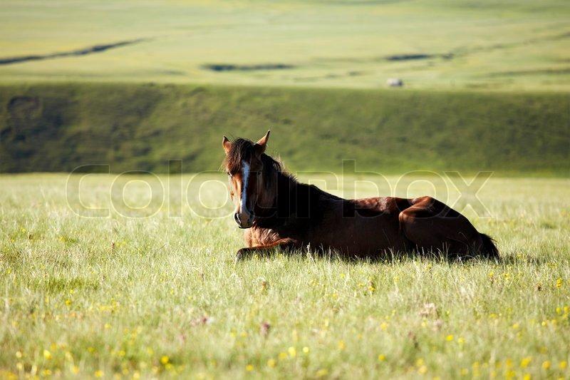 pferd liegend im gras in den bergen stockfoto colourbox. Black Bedroom Furniture Sets. Home Design Ideas