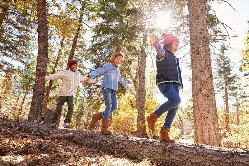 Children Having Fun And Balancing On Tree In Fall Woodland, stock photo