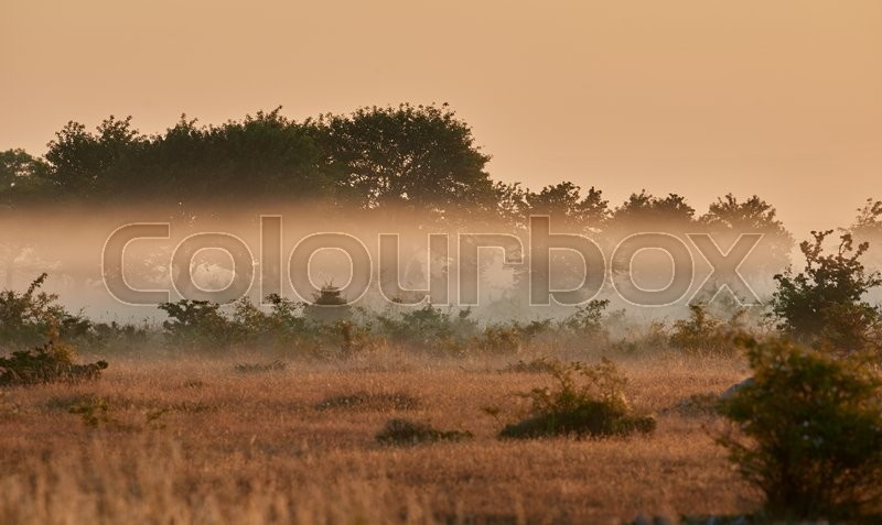Stock foto af 'Alvar limestone moor in the early morning'