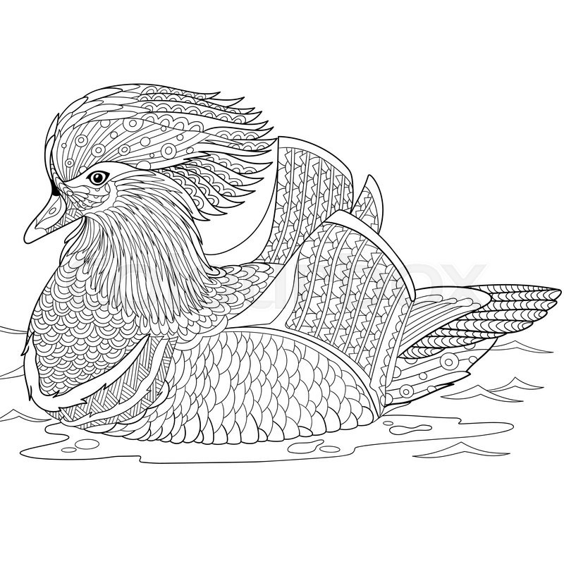zentangle stylized cartoon mandarin duck  isolated on