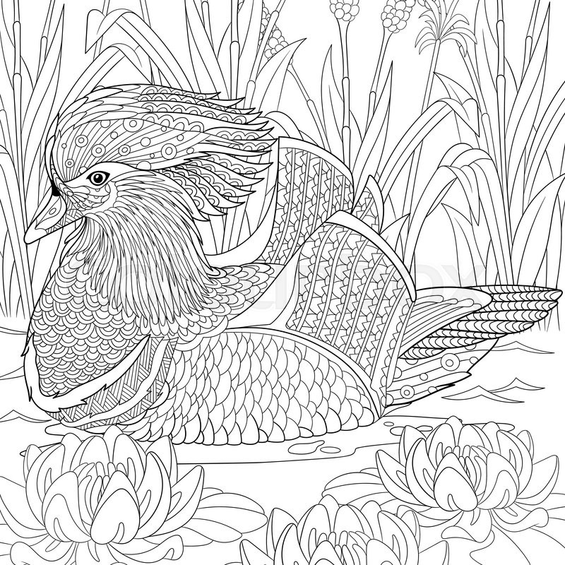 Zentangle Stylized Cartoon Mandarin Duck Swimming Among