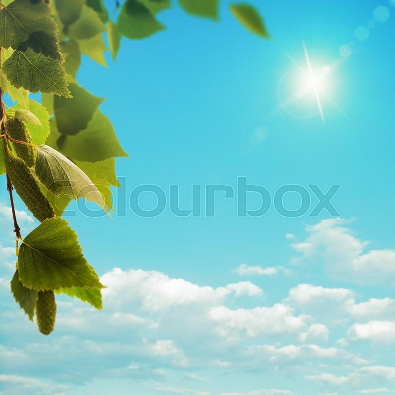 Birch tree under bright summer sun, seasonal background, stock photo