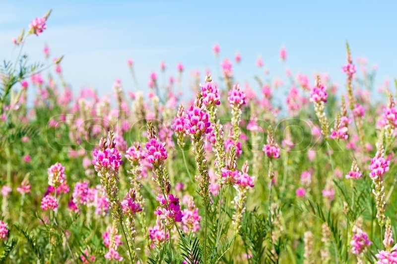 Image view the sky through the green grass with pink flowers stock image view the sky through the green grass with pink flowers stock photo mightylinksfo Images