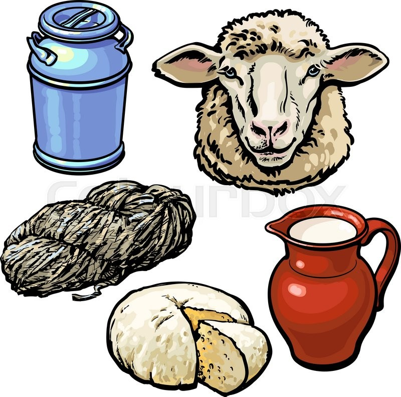 sheep vector head production milk wool cheese farm hand background dairy sketch drawn colourbox isolated illustration