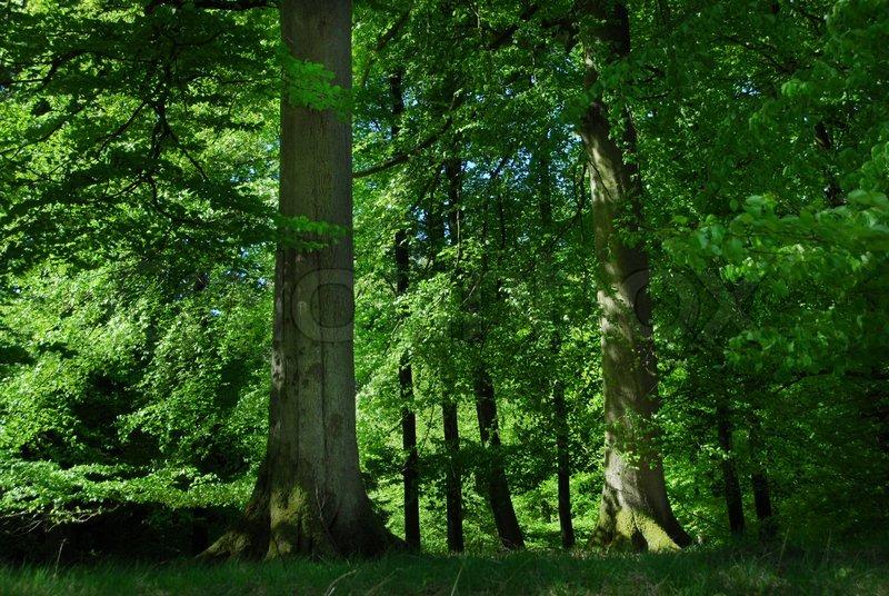 Forest Property Management