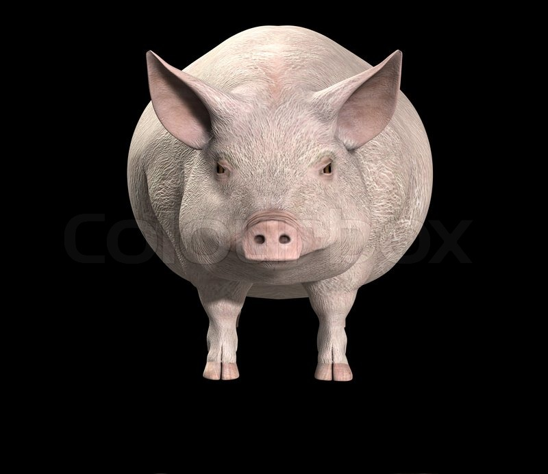 Stock image of 'pig, boar, snout'