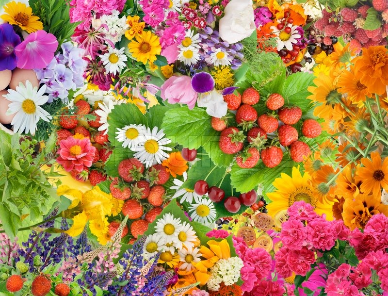 free spring garden wallpaper