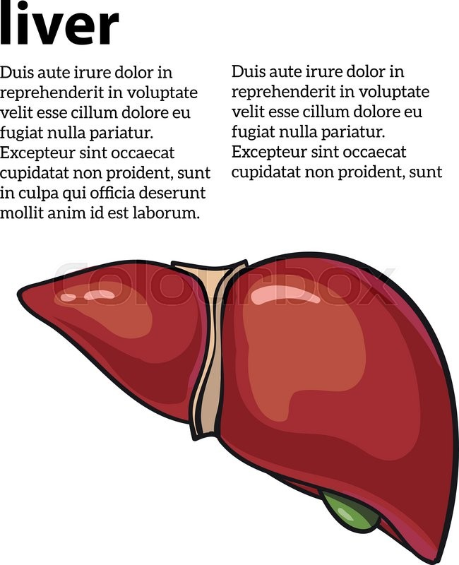 Healthy Human Liver Vector Illustration Sketch Drawn By Hand