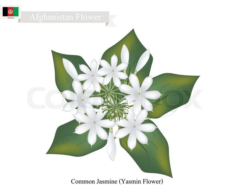 wei e floral flora vektorgrafik colourbox. Black Bedroom Furniture Sets. Home Design Ideas