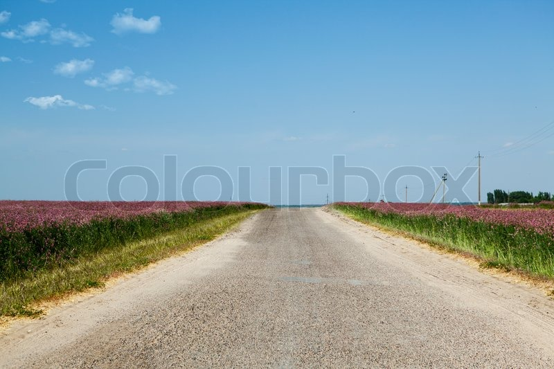 Country road among fields on a background of clear sky, stock photo
