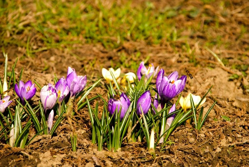 Different first spring flowers grow up in soil close up in national different first spring flowers grow up in soil close up in national park shallow dof stock photo colourbox mightylinksfo