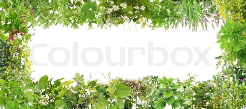 Green banner collage rahmen aus pflanzen stockfoto for Green pflanzen