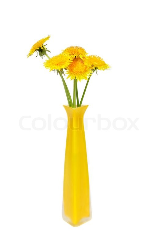 Bunch Of Yellow Dandelions In High Vase On White Background Stock