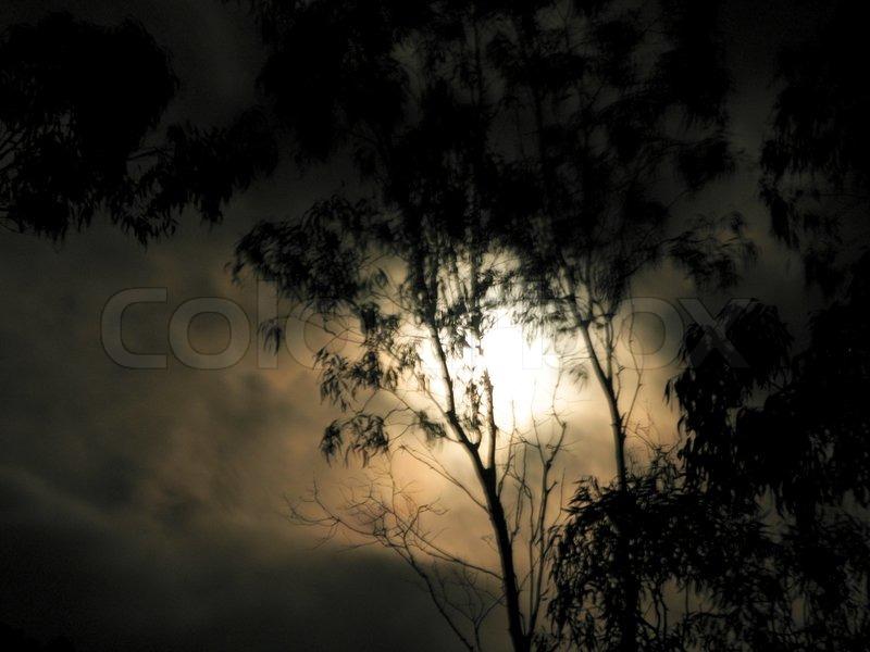 spooky stimmung mit mondlicht und blured eukalyptus baum. Black Bedroom Furniture Sets. Home Design Ideas