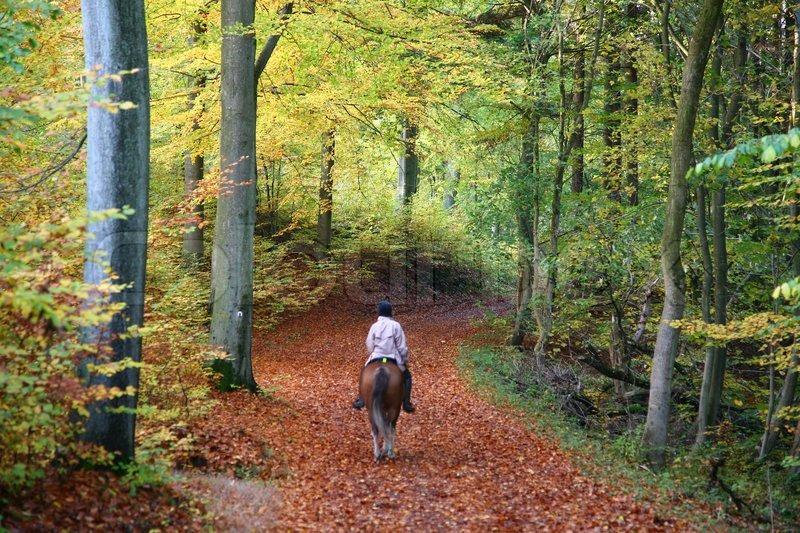 Woods Path Landscape Paintings