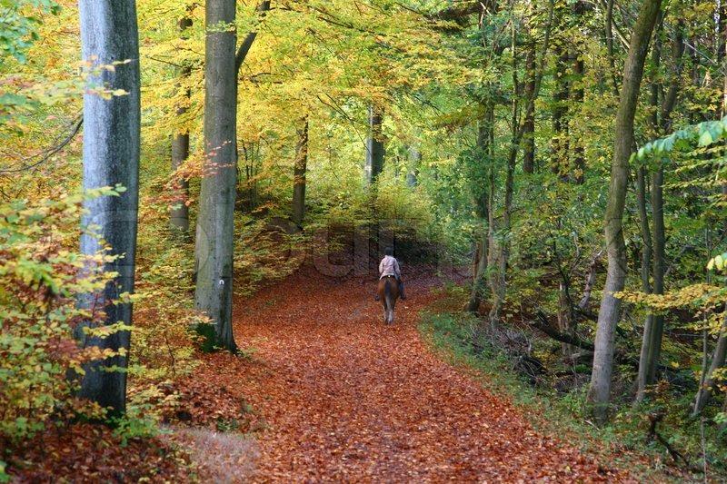 Colourbox browse natur landskab skov billede 1939624 brug for hjaelp